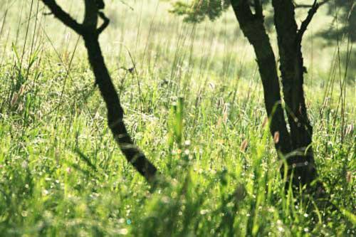 ズミノ木と草原